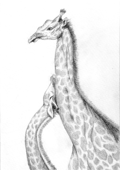 giraffe-scan